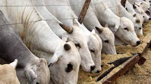 Image result for Anti-grazing law: We can't be cowed by FG – Ekiti Speaker